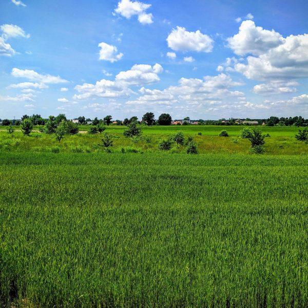 Widok na okolicę od strony zachodniej