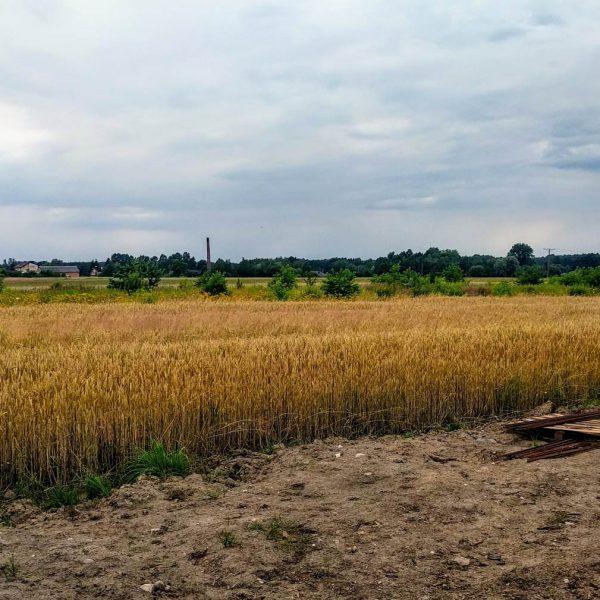 Widok na okolice od zachodniej strony